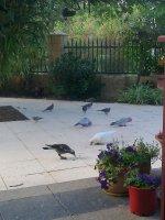 JW and bird feeding 2.jpg