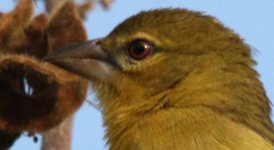 Ethiopia BF Weaver 02.jpg