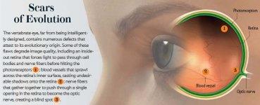 scars_eye.jpg