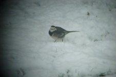garden birds 013.JPG