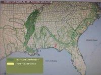 FORESTS IVORY BILLED.jpg