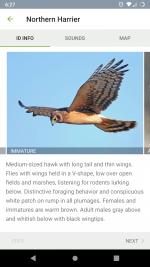 Screenshot_20210127-062735_Merlin_Bird_ID.png