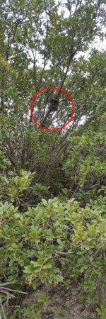 Tree_trap.jpg