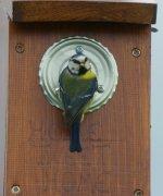 Nesting BT  (3).jpg