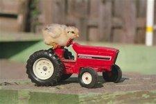bird in tractor.jpg