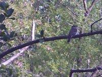6_26_21_Mystery_Bird_A.JPG