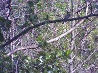 6_26_21_Mystery_Bird_C.JPG