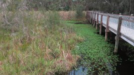 warriewood wetlands G1X IMG_2550.jpg