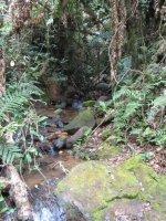 Iaroka Forest.JPG