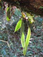 Iaroka Forest 2.JPG