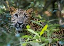 leopard-6400.jpg