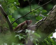 stoat_1862 - Copy.jpg