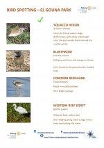 Bird Identification Guide - El Gouna Park - Page 3.jpg