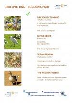 Bird Identification Guide - El Gouna Park - Page 4.jpg