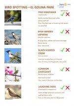 Bird Identification Guide - El Gouna Park Page 2.jpg