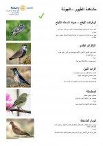 Bird Identification Guide - El Gouna Park - Arabic - Page 2.jpg