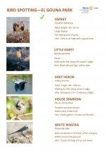 Bird Identification Guide - El Gouna Park Page 1.jpg