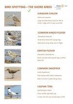 Bird Identification Guide - Shore Birds - Page 5.jpg