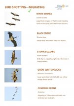 Bird Identification Guide for El Gouna - Migration - Page 6.jpg