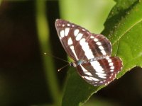 Butterfly - AAA - India Goa - Bhagwan Mahaveer - 13Nov22 - 05-4280.jpg