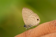 Unknown butterfly_IMG_1625_September 13, 2015.jpg