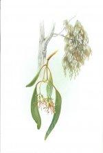 Mistletoe ABCY.jpg