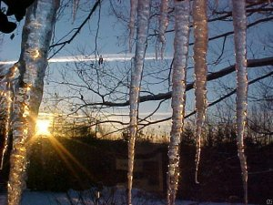 Sunset behind icicles.