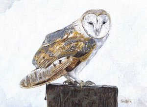 Barn owl in acrylics