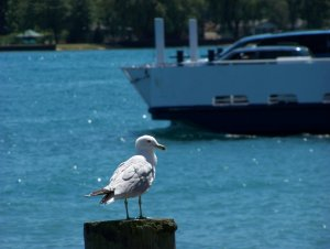 Gull and Ferry
