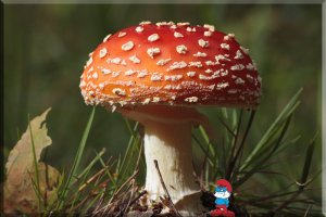 Fly Agaric Just For Doux