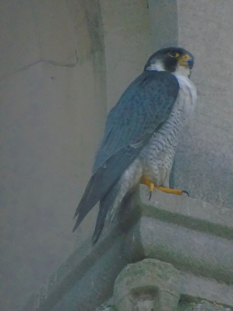Father Peregrine